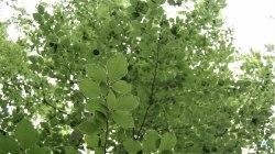 Zielone liście nade mną, a muzyka natury we mnie…