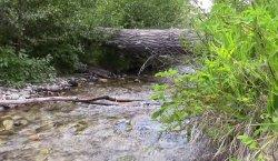 Zagubiony strumień w Montanie :)