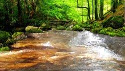 Strumyczek, mech i relaks w środku lasu:)