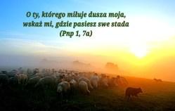W przeddzień Niedzieli Dobrego Pasterza