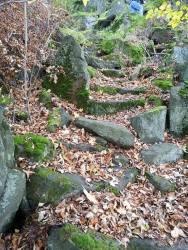 Włodek przewodnikiem po jesiennym lesie