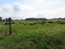 Przydrożne kapliczki, krzyże i figury świętych w polskim krajobrazie