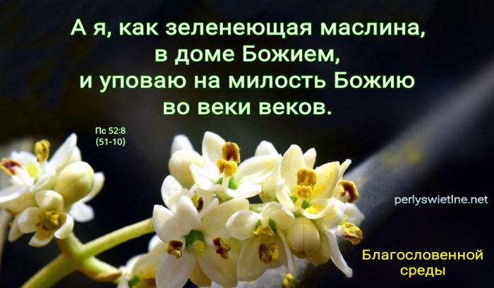 Я упаваю на милость Божию во веки веков (БЛ)