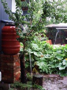Flusso acqua piovana permacultura