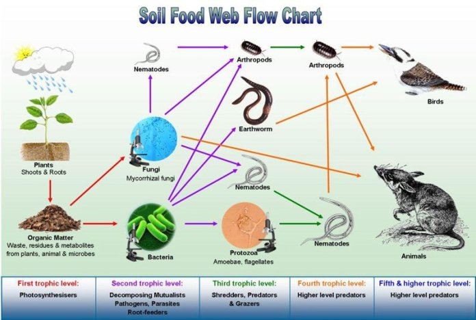 Rete Alimentare del suolo