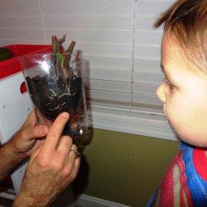apprendimento radici permacultura