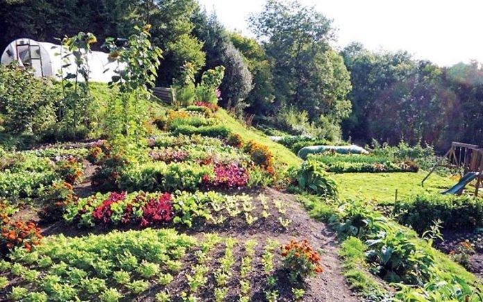 Tecniche raccolto permacultura
