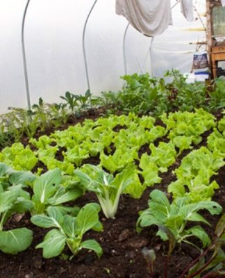 polytunnel inverno permacultura