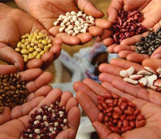 biodiversita sostenibilita permacultura