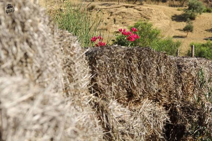 pacciamatura permacultura sicilia