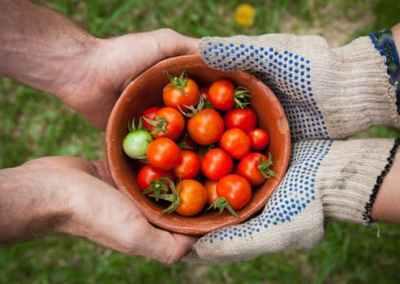 Spare Harvest