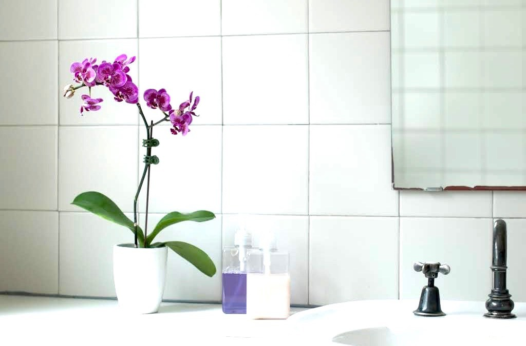 Declutter and Reset your Honorable Bathroom: Togetherness Design Series