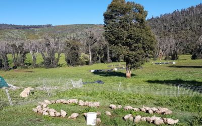 """""""Grow food and grow farmers"""" – permaculture stories"""