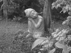Bealtaine, where Permaculture meets Buddhism