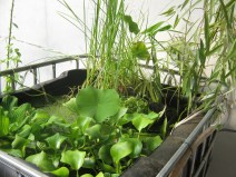 Plant tank with edible and useful species