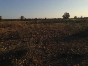 2-Gigiby-land-before-permaculture-work-300x225
