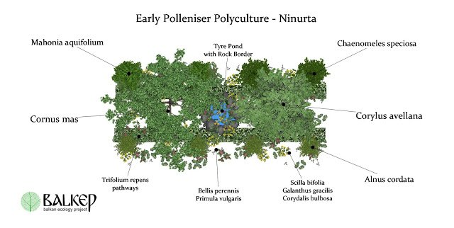 All components of the Early Polleniser Polyculture