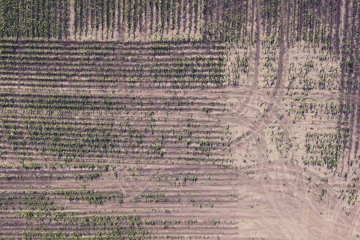 Monokultur-Landwirtschaft