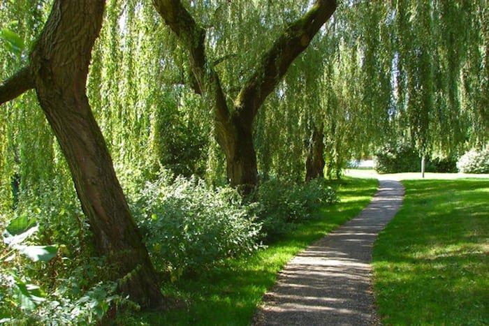Gehweg durch die Weiden