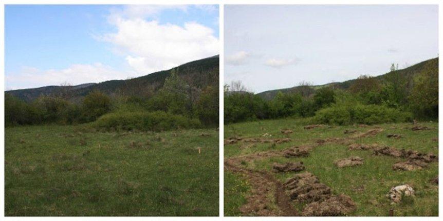 Phronensis-Garten vor und nach Schuss