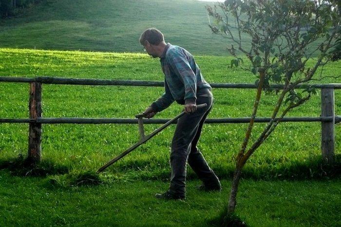 Mann, der Rasen schneidet