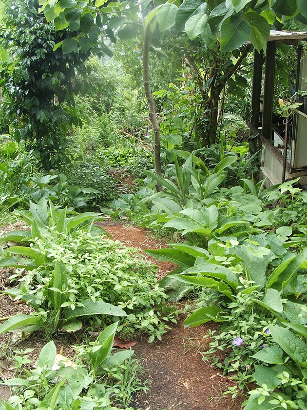 Creating A Food Forest Garden