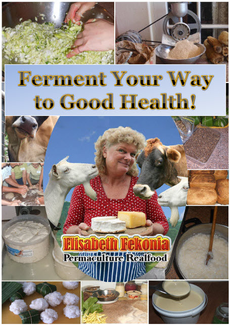 ferment your way to good health book