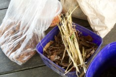 Dried leaves and straw