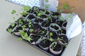 seedlings1