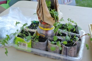 seedlings3