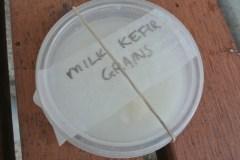 milk_kefir