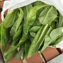 cos_lettuce