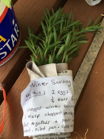 winter_savory