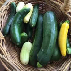 cucumbers_zucchinis