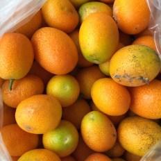 cumquats2