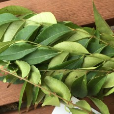curry_leaves2