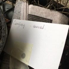 annual_comfrey