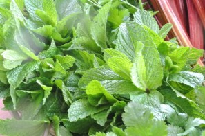 mint_leaves