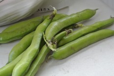 broad_beans2