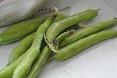broad_beans2