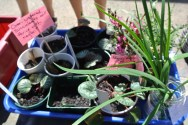potted_plants3