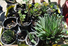 potted_plants4