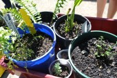 potted_plants5
