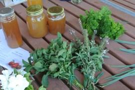 herbs5