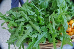 oakleaf_lettuce