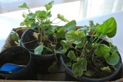 potted_plants2