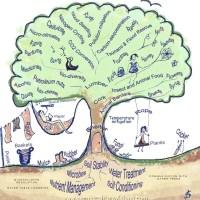 10 Amazing Tree Powers