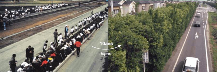 La méthode Miyawaki au Japon
