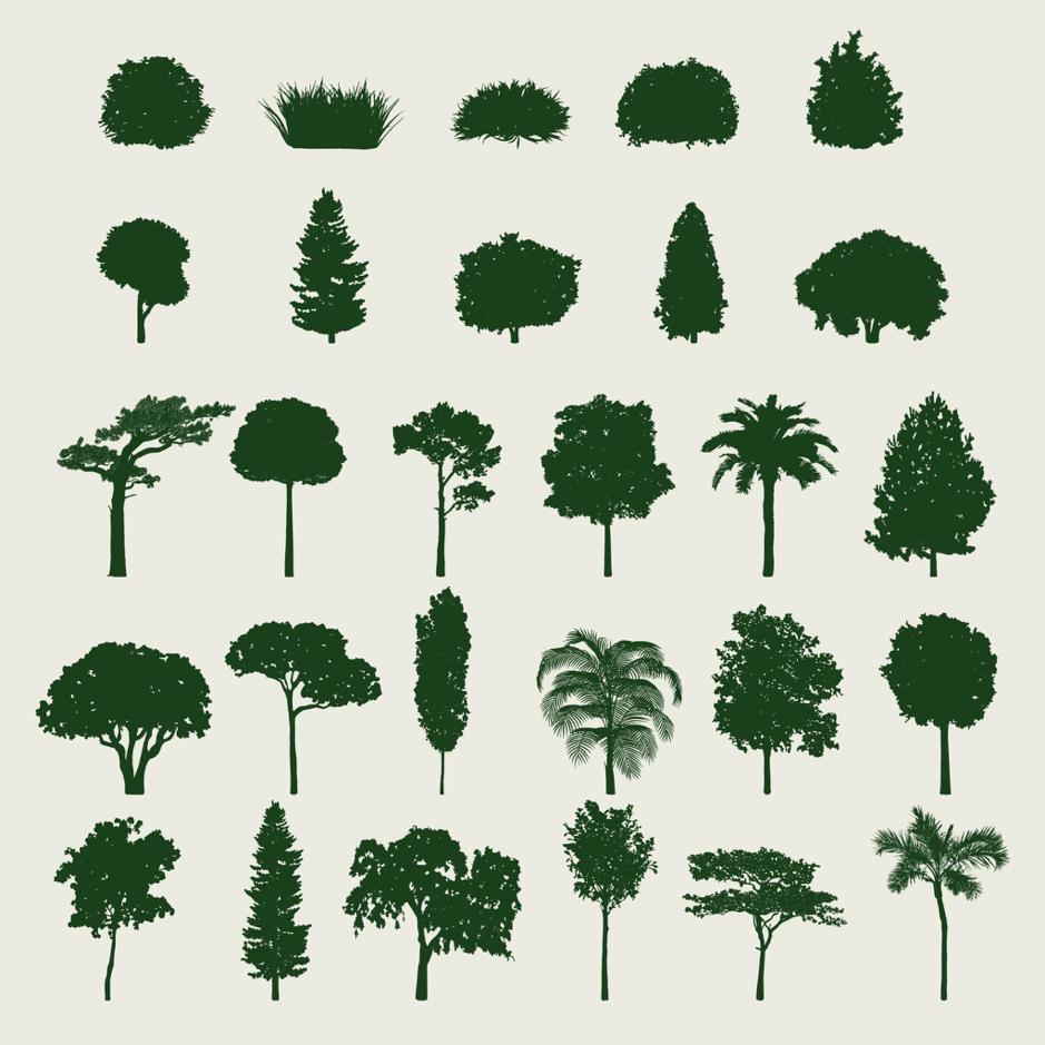 apprendre à reconnaitre les arbres