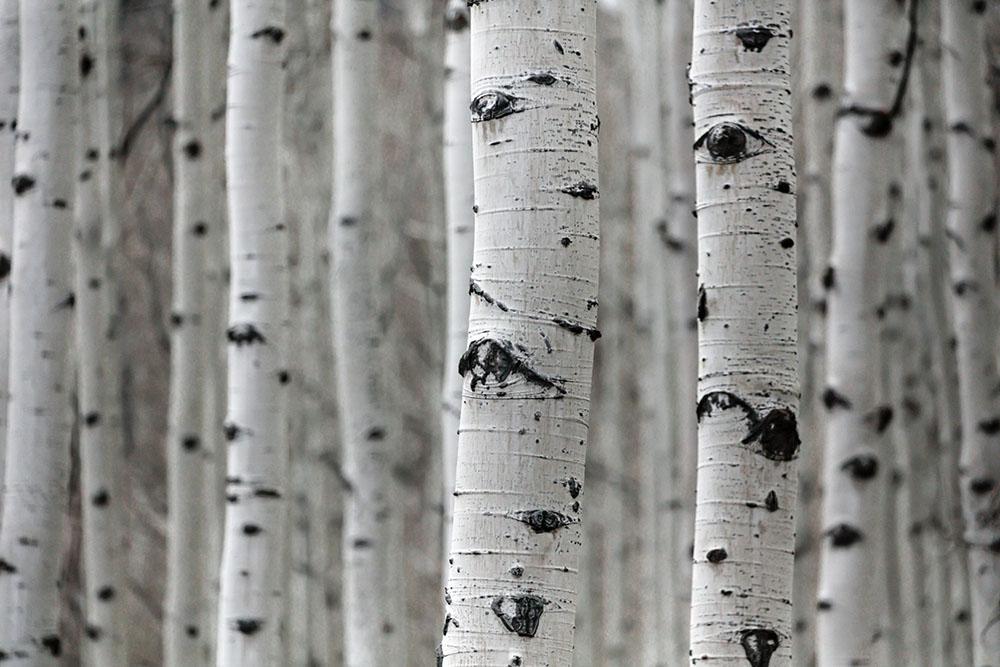 reconnaître un arbre par son tronc